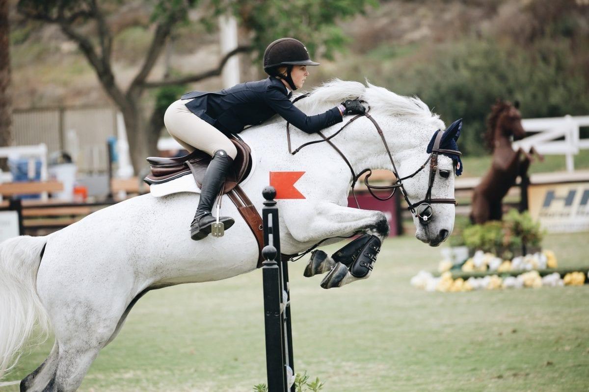 Sprzęt jeździecki – przegląd garderoby jeźdźca