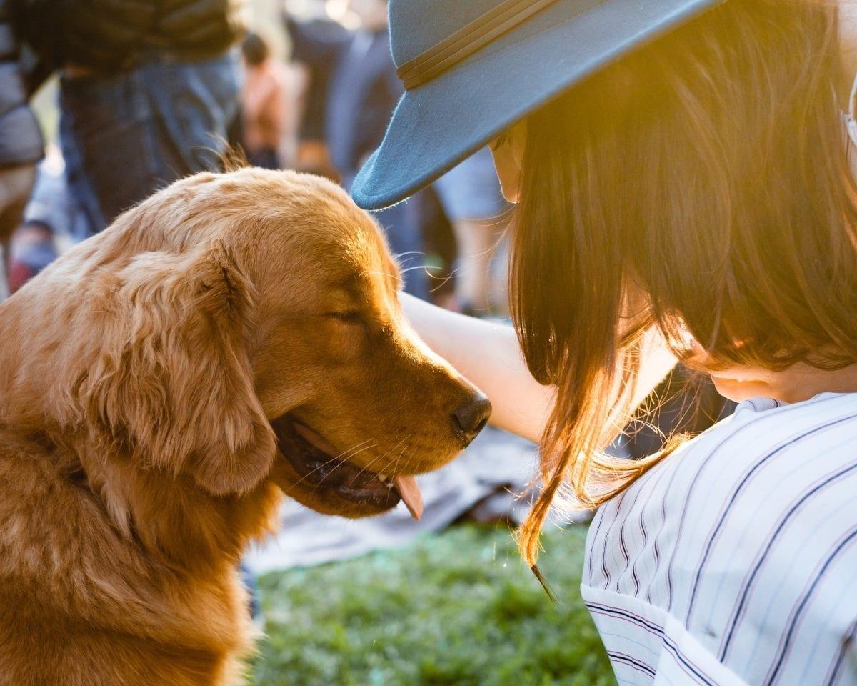 Krematorium dla zwierząt to godne pożegnanie z czworonożnym przyjacielem